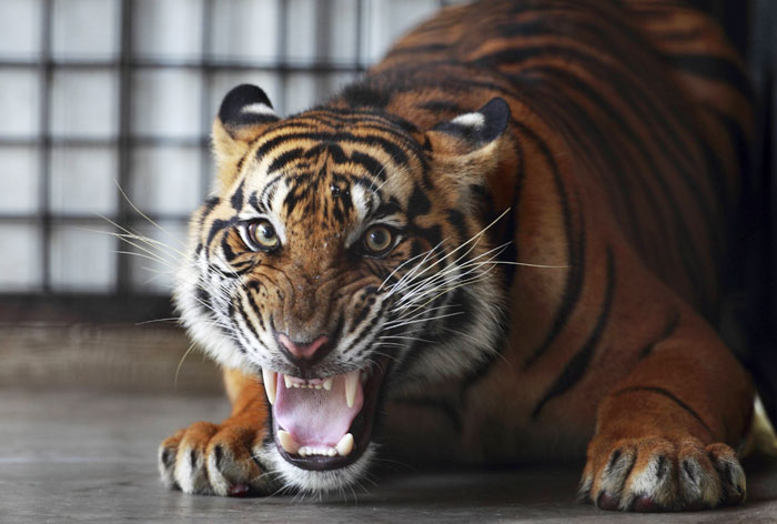 """The Cold North–Part three, New Jersey """"The Tiger Rising"""" – A Thing ..."""